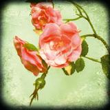 Botanical Delight I