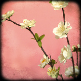 Pink Blossom I