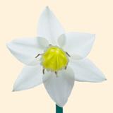 Bloom I