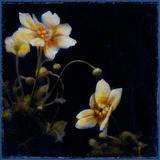 Midsummer Night Bloom III