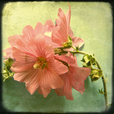 Botanical Delight III