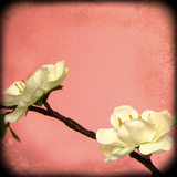 Pink Blossom II