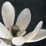 Moonlight Lily Pond I