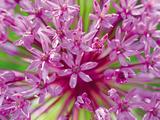 Flowerburst II
