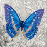 Blue Butterfly I