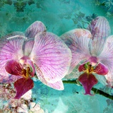 Poetic Orchids No 8