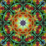 Mandala Whole Nature IV