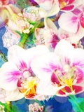 Orchids Look