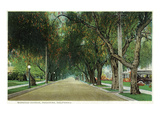 Pasadena  California - View Down Marengo Avenue