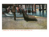 Santa Catalina Island  California - Feeding Scene of Ben the Giant Sea Lion