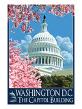 Capitol Building and Cherry Blossoms - Washington DC