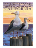 Cayucos  California - Sea Gulls