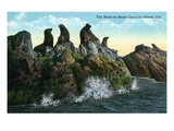 Santa Catalina Island  California - View of Seals on the Rocks