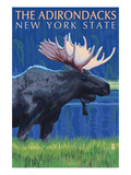The Adirondacks  New York State - Moose at Night