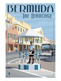 Bermuda - The Birdcage