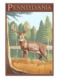 Pennsylvania White Tailed Deer