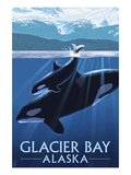 Glacier Bay  Alaska - Orca and Calf