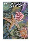 Santa Barbara  California - Tidepools