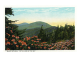 Blue Ridge Mountains  North Carolina - Mount Mitchelll Scene