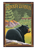Pennsylvania - Bear in Forest