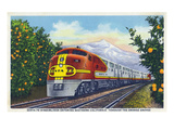 California - View of a Santa Fe Train Passing Through Orange Groves