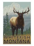 Whitefish  Montana - Elk Scene