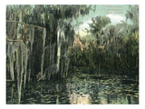 Florida - View of Pond Lilies and Hanging Moss