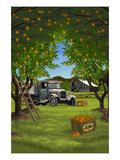 Orange Orchard Scene