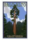 Palo Alto  California - California Redwoods