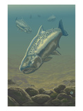 King Salmon Underwater