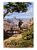 Grand Canyon National Park - Elk and South Rim