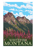 Whitefish  Montana - Fireweed and Mountains