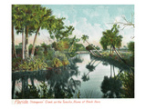 Florida - Thompson's Creek on Tomoka River