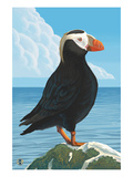Puffin - Tufted