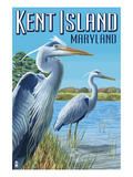 Blue Heron - Kent Island  Maryland