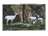 Lookout Mountain  Tennessee - Rock City Gardens  View of White Fallow Deer