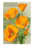 Jackson  California - The Californian Poppy Flowers