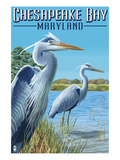 Chesapeake Bay  Maryland - Blue Heron