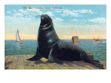 Santa Catalina Island  California - View of Old Ben the Giant Sea Lion on Dock