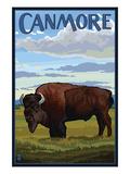 Canmore  Alberta  Canada - Solo Bison