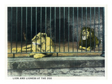 Cincinnati  Ohio - Zoological Gardens Lion Cage Scene