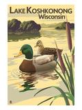 Lake Koshkonong  Wisconsin - Mallard Ducks