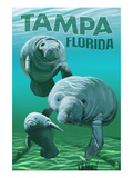 Tampa  Florida - Manatees