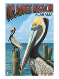 Orange Beach  Alabama - Brown Pelican