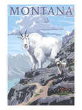 Mountain Goat and Kid - Montana