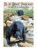 Blue Ridge Parkway  North Carolina - Black Bears Fishing