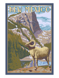 Big Horn Sheep - New Mexico