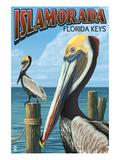 Islamorada  Florida Keys - Pelicans