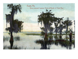 Eustis  Florida - Cypress Trees at Trout Run Mouth