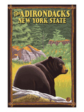The Adirondacks  New York State - Black Bear in Forest
